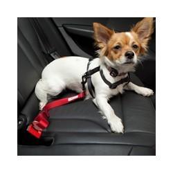 Correa de Perro con Enganche para Cinturon de seguridad